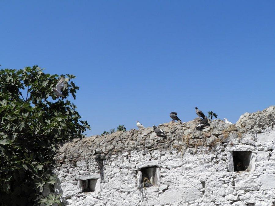 Κορώνη (γενική άποψη)